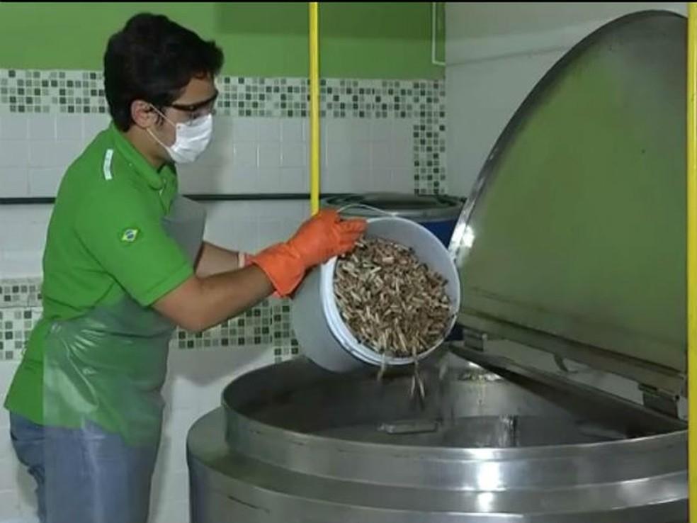 Bitucas se tornam papel após processo de reciclagem — Foto: TV TEM/ Reprodução