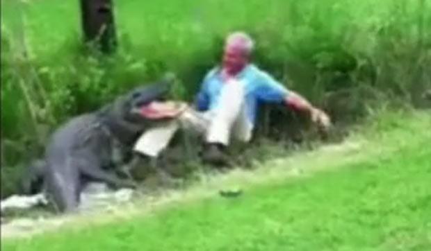 Biólogo foi atacado ao tentar segurar aligátor. (Foto: Reprodução)