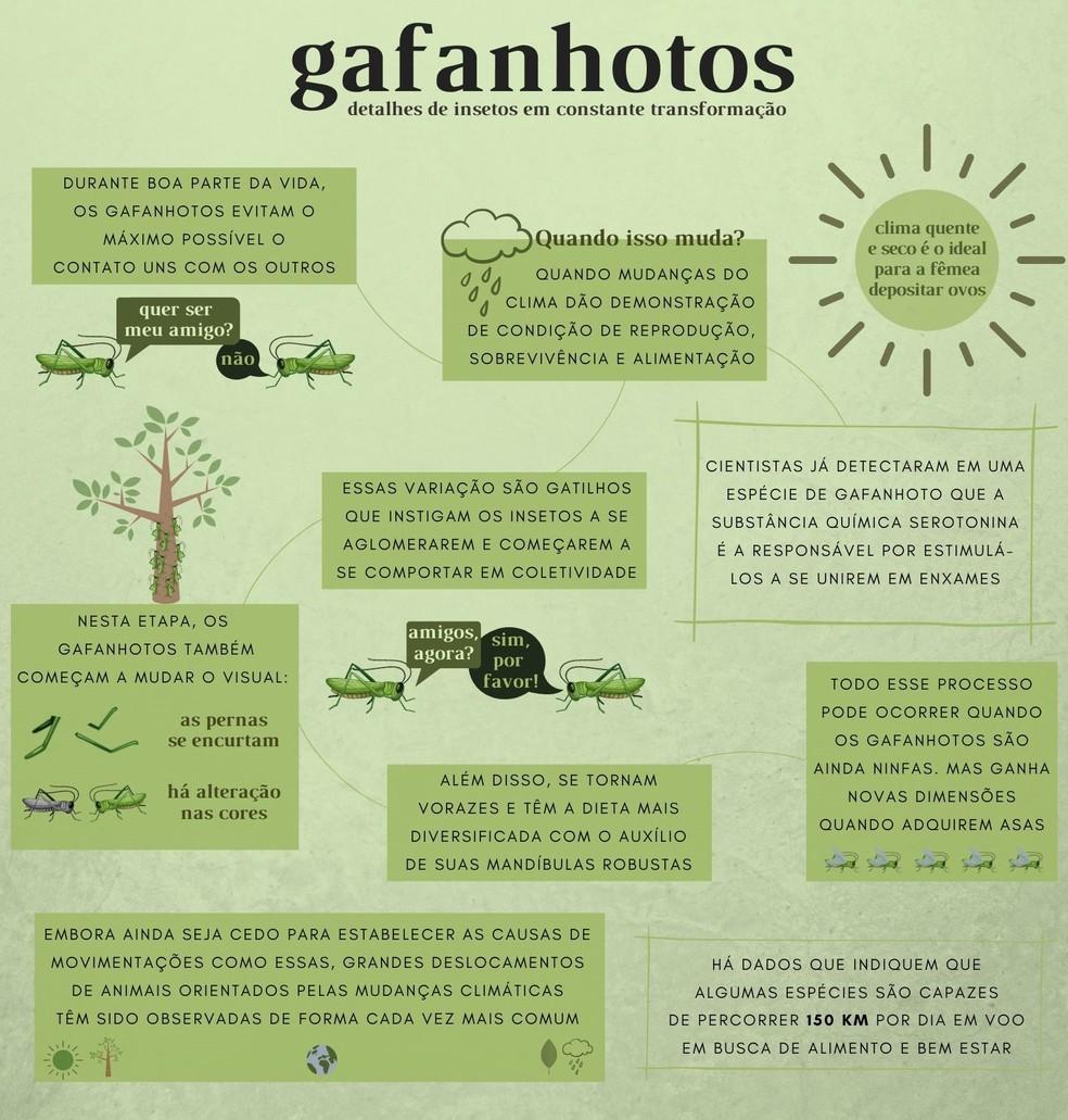 Conheça alguns detalhes curiosos sobre os gafanhotos e seu desenvolvimento — Foto: Arte/TG