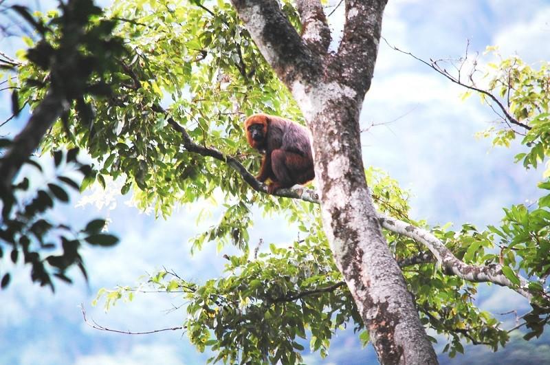 Inea reconhece  Reserva Particular do Patrimônio Natural em Conceição de Macabu, no RJ
