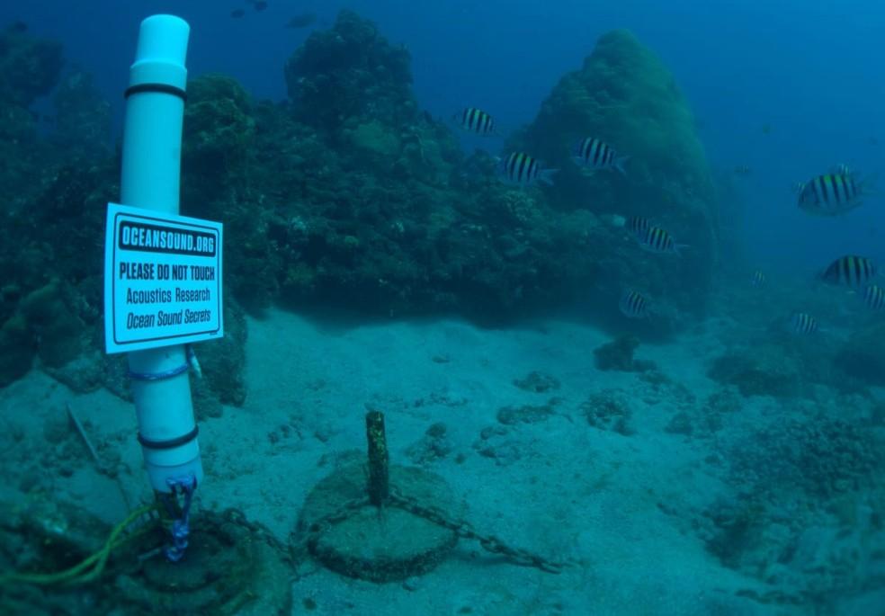 Equipamento instalado na Baía dos Golfinhos — Foto: Raul Ribeiro/Divulgação