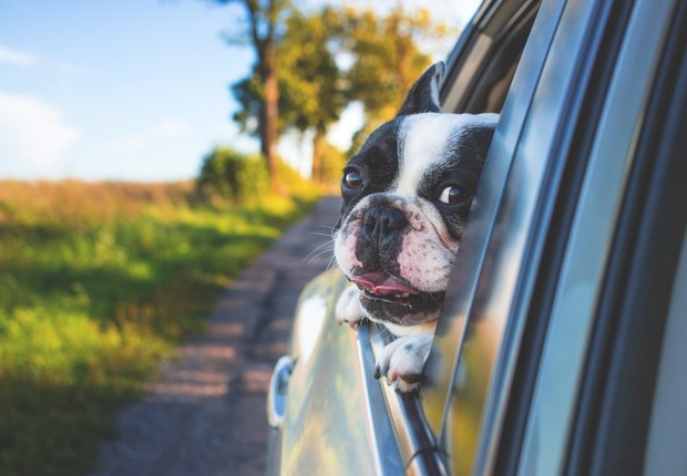 pug, cachorro, carro, pet, animal de estimação (Foto: Pexels)