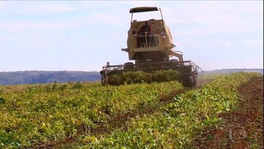 Cresce produção de feijão no noroeste de MG