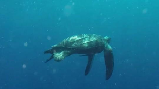 Foto: (Ocean Explorers)