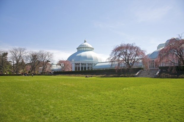 Immense green lawn at New York Botanical Garden, a designated national landmark botanical garden located in the Bronx, New York City, United States. It spans some 250 acres (100 ha) of Bronx Park. (Foto: Getty Images)