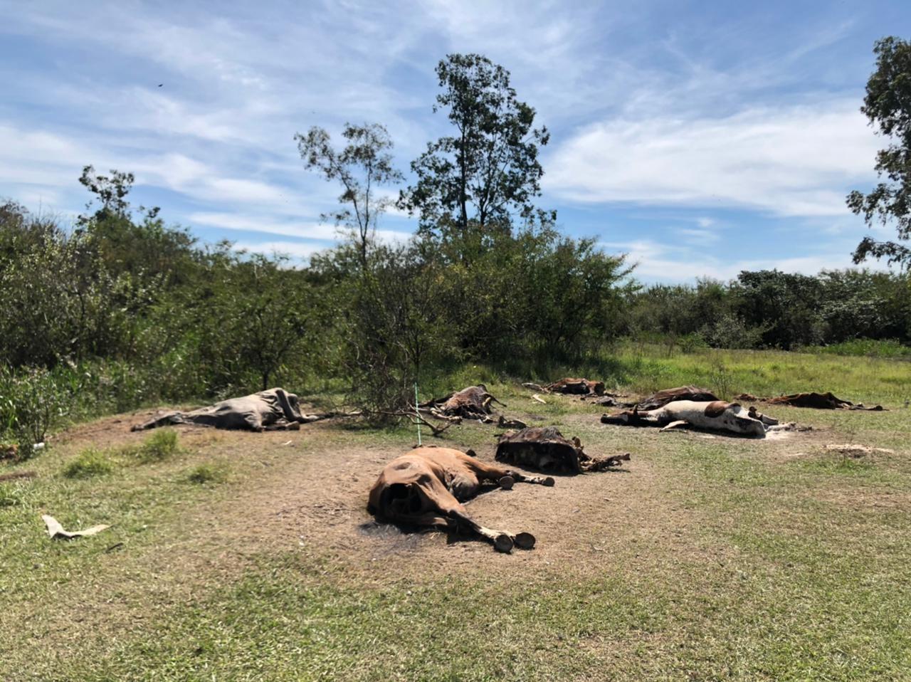 Polícia investiga possível cemitério de cavalos em Nova Santa Rita
