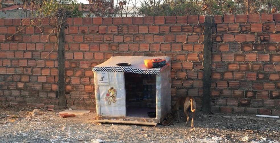 Casinhas foram construídas com centenas de caixas de leite e abrigam cãezinhos de Teresina — Foto: Maria Romero/ G1 PI