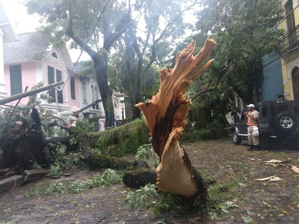 Tronco de árvore ficou distorcido no Humaitá — Foto: Marcos Serra Lima/G1