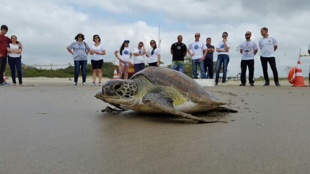 Mais de 1,7 mil tartarugas foram achadas mortas em 2017 em SC