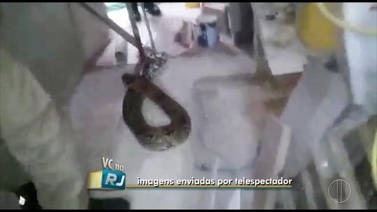 Morador encontra jiboia de mais de dois metros no quintal de casa em Macaé