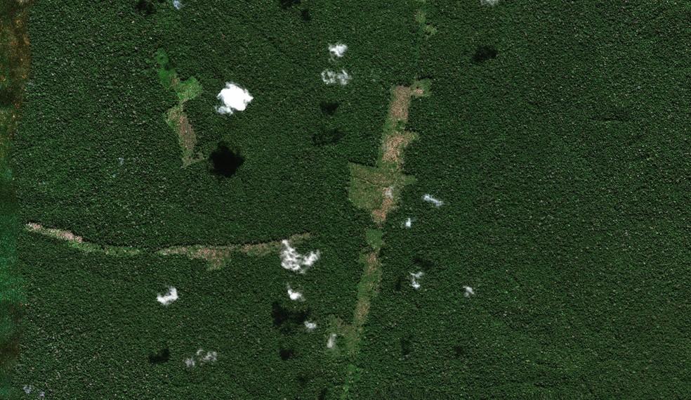 Você viu? Condenada a pagar R$ 1,3 milhão por desmatamento