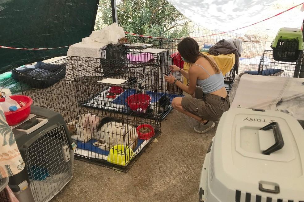 Centro de acolhida de animais em Atenas, em 12 de agosto de 2021 — Foto: AFP
