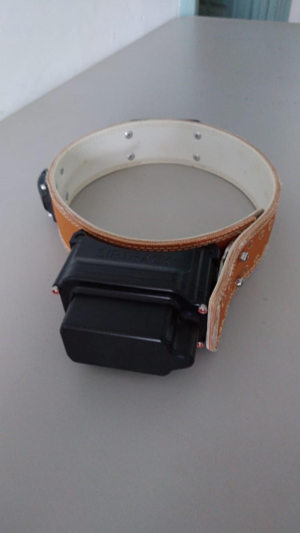 Onça-pintada receberá um colar com sinal GPS e VHF. — Foto: Cras/Divulgação