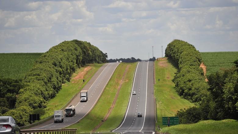 estrada-rodovia-asfalto-cerca-cerva viva-campo (Foto: Ernesto de Souza/ Ed. Globo)
