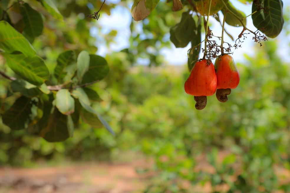 Pelo menos 30% dos alimentos comprados pelo Governo do RN têm que ter origem da agricultura familiar, diz lei — Foto: Sandro Menezes
