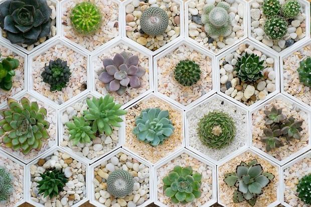 Mini Cactos Como Cuidar Das Suas Plantinhas Casa Vogue