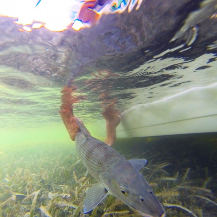 O imenso bonefish foi devolvido ao mar (Foto: Divulgação/Phofish)