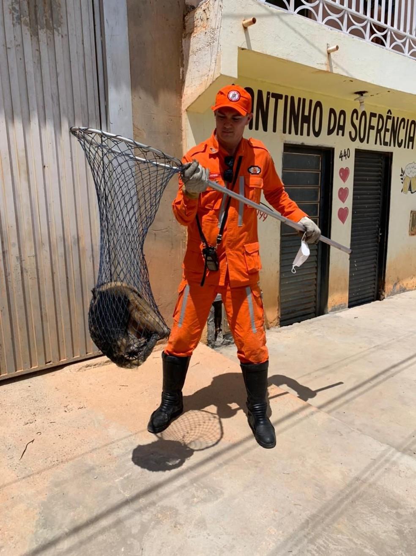 Animal foi resgatado por bombeiros em Barreiras — Foto: Divulgação/Corpo de Bombeiros