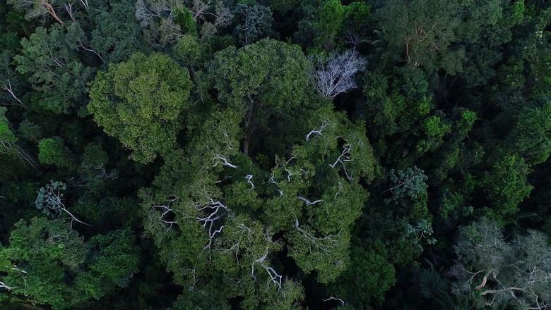 Floresta Amazônica (Foto: TV Brasil/Divulgação)