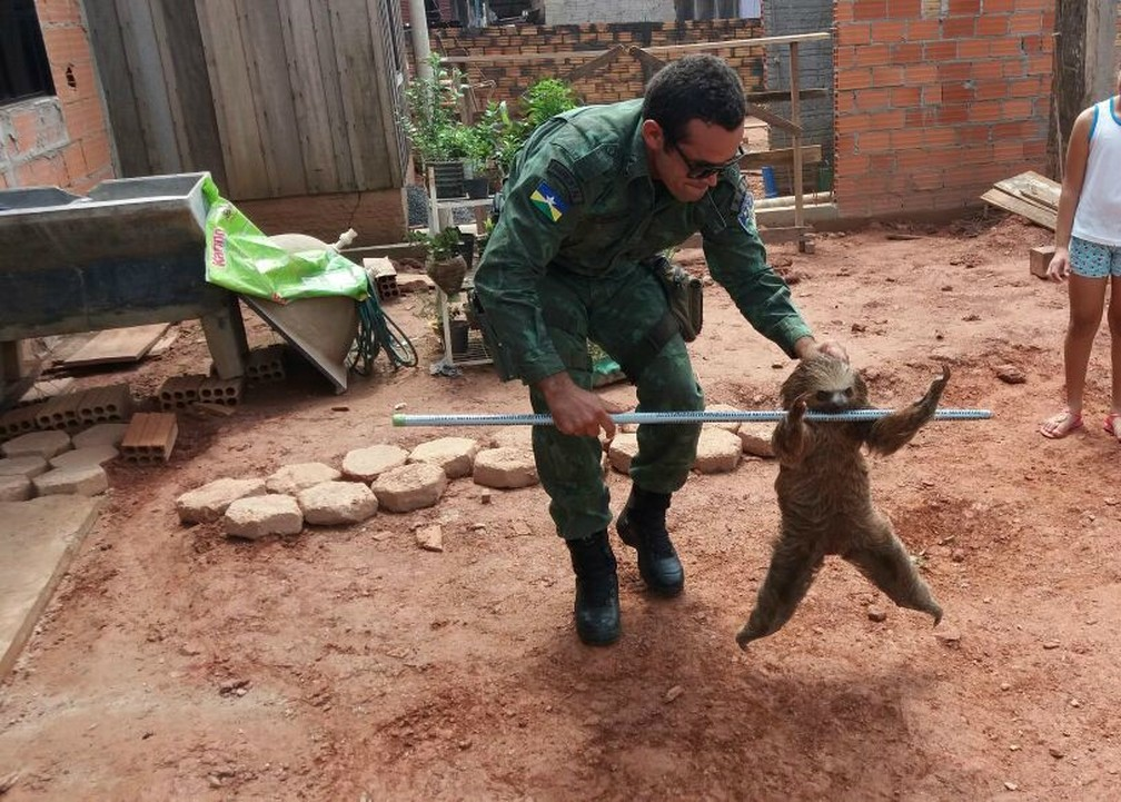 Animal foi resgatado pela polícia ambiental (Foto: 190 Online/Reprodução)