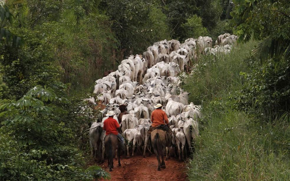 Homens tocam gado em fazenda ao longo da Rodovia Transamazônica perto de Uruará (PA) — Foto: Nacho Doce/Reuters