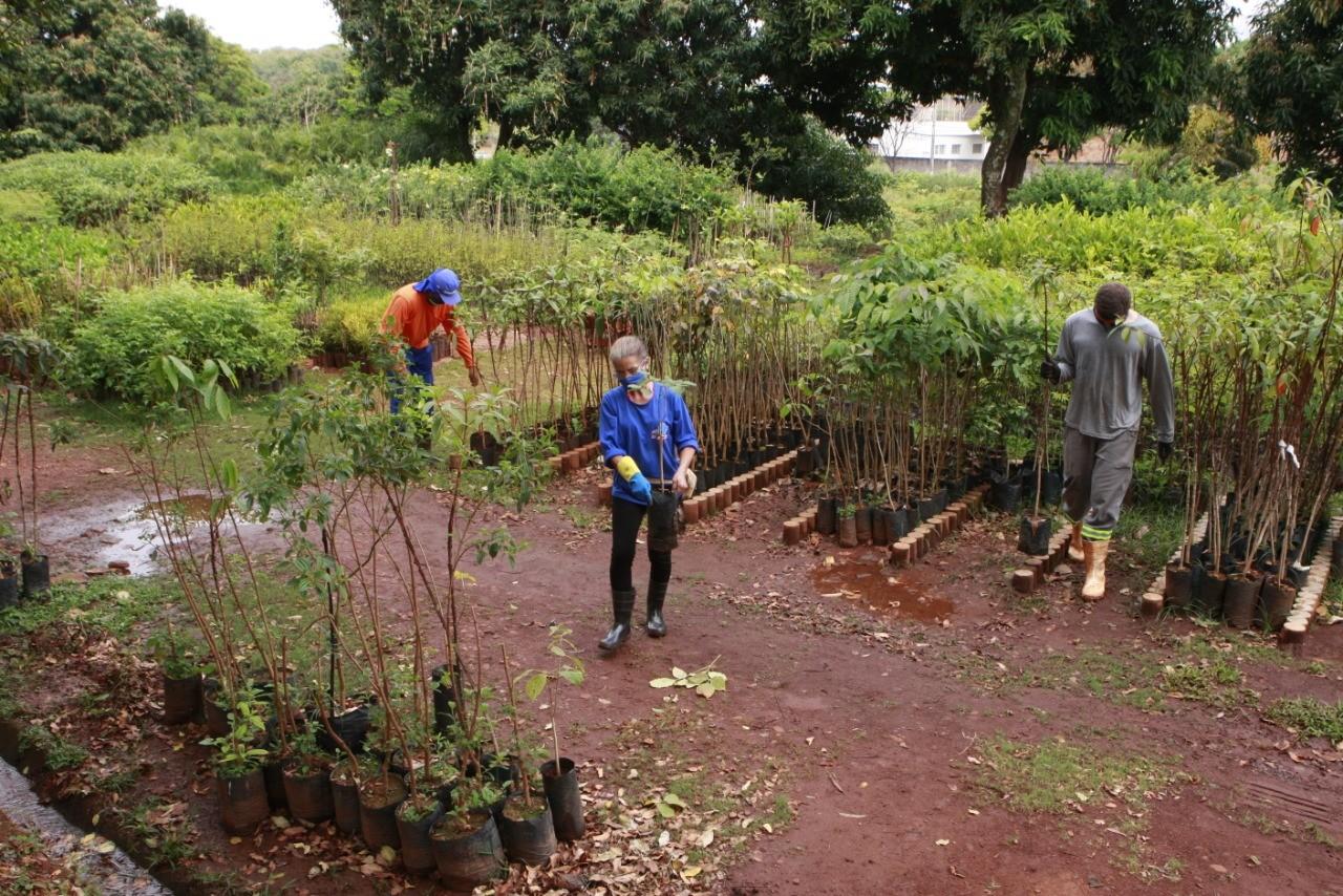 Horto Municipal de Uberlândia retoma atendimentos presenciais