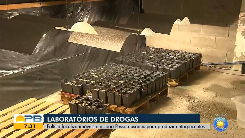 Polícia desarticula três laboratórios 'inteligentes' de maconha, em João Pessoa — Foto: Reprodução/TV Cabo Branco