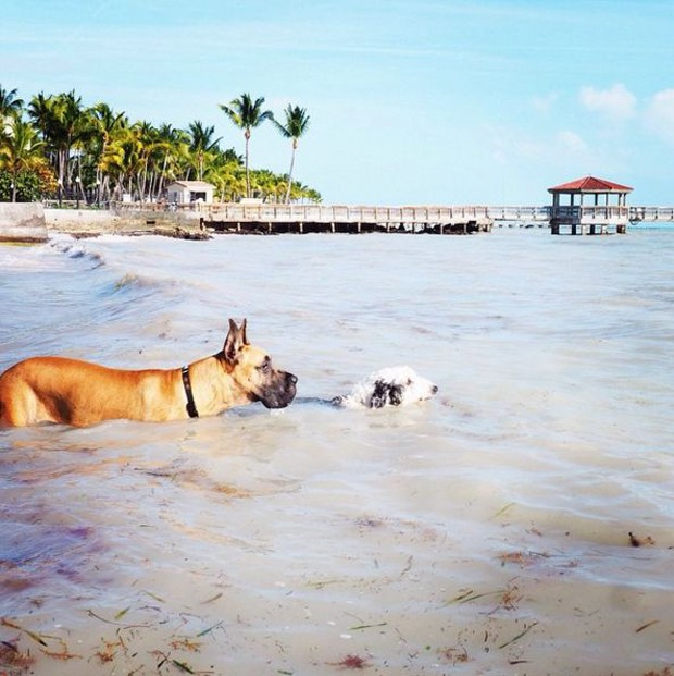 Key West: um roteiro pela cidade ideal para se divertir com seu pet (Foto: Thinkstock e Divulgação)