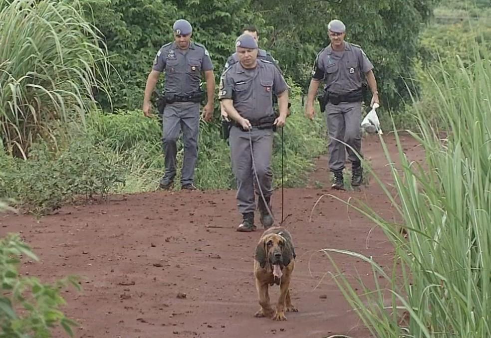 No sábado (11), cão farejador ajudou nas buscas por Emanuelle em Chavantes — Foto: Reprodução/TV TEM