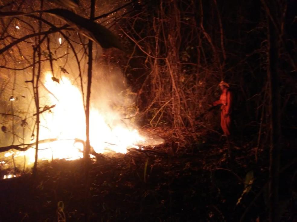 Incêndio em propriedades foi combatido pela Defesa Civil de Talismã — Foto: Divulgação/Defesa Civil de Talismã