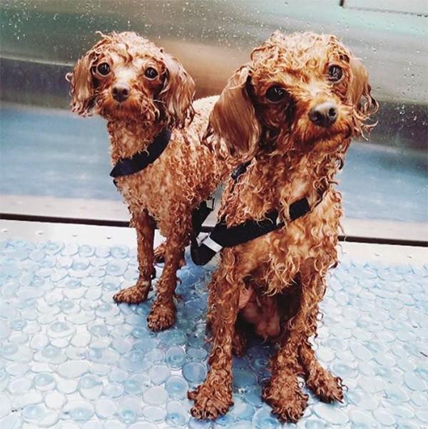 Os cães de Katy Perry e Orlando Bloom (Foto: Instagram)