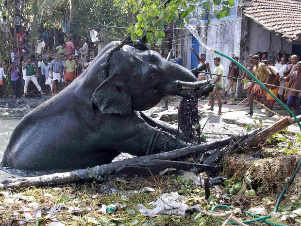 Após seis horas, homens conseguem erguer o elefante e retirá-lo da lama (Fot Sivaram V/Reuters)