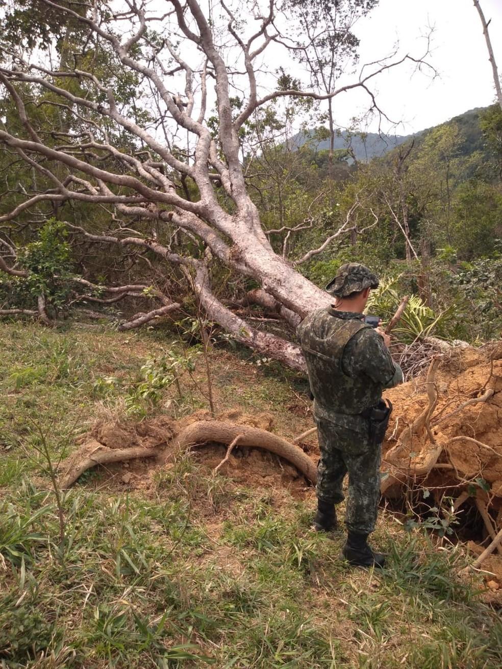 Em 2019, foram identificadas 559 áreas com mais de 5,4 mil hectares desmatados sem autorização dos órgãos públicos — Foto: Divulgação/Polícia Ambiental do Paraná