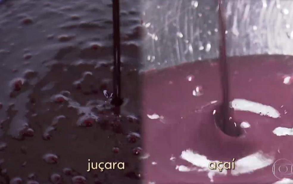 Polpa da juçara e do açaí são muito parecidas — Foto: TV Globo