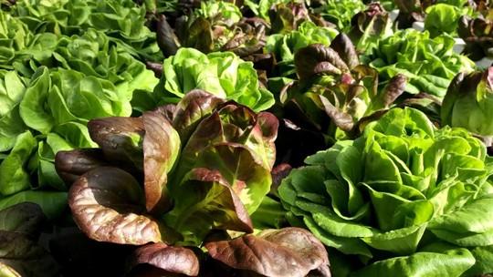 Cultivo de mini verduras reduz desperdício de alimentos e incentiva consumo consciente