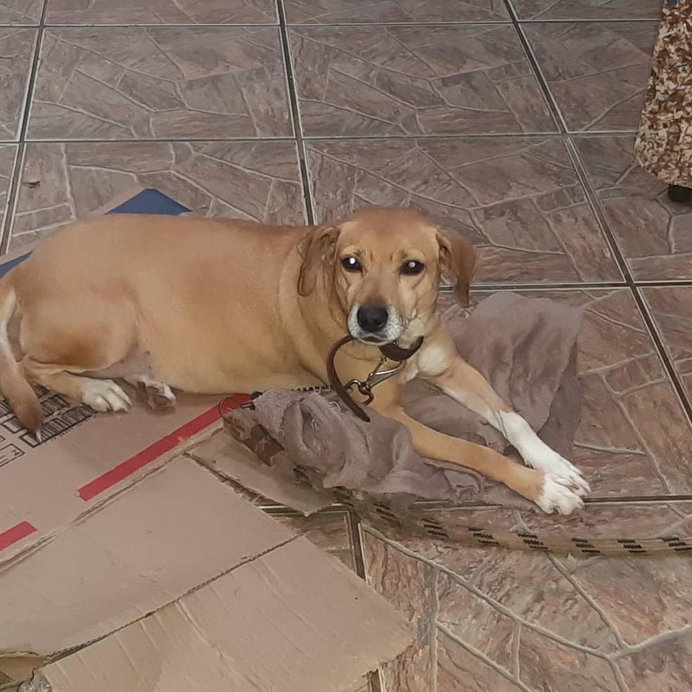 Animais estavam há dias dentro de casa em Bauru sem a dona que foi internada com Covid  — Foto: Cristiane Cortez/ Arquivo pessoal