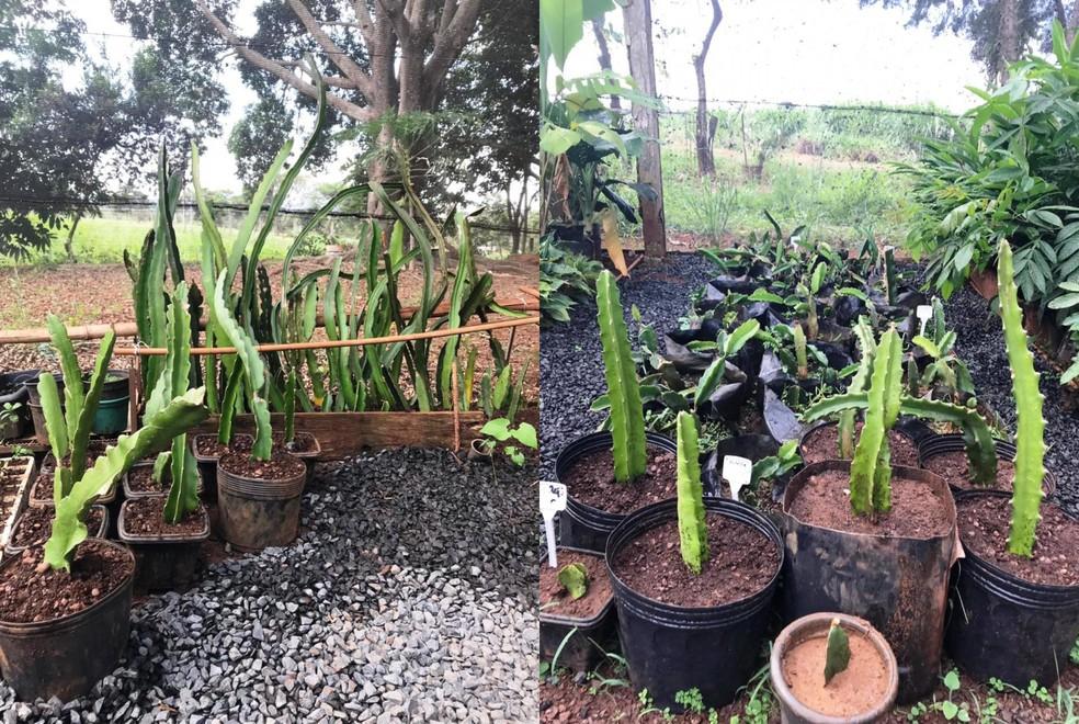 Plantas e mudas serão utilizadas em estudo na Fazu — Foto: Márcia Borges/Arquivo Pessoal