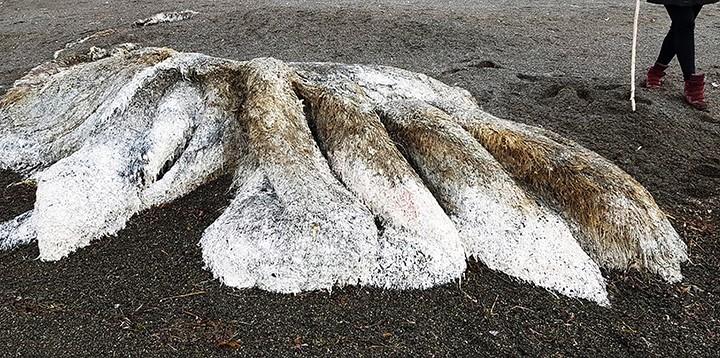 Criatura encontrada na Sibéria não tem olhos e nem cabeça (Foto: Reprodução/YouTube)
