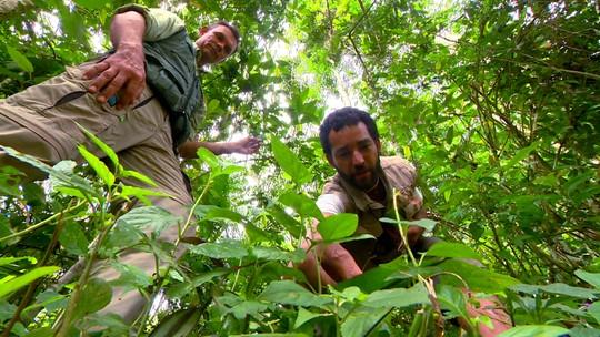 Plantas Alimentícias não convencionais também são encontradas em florestas