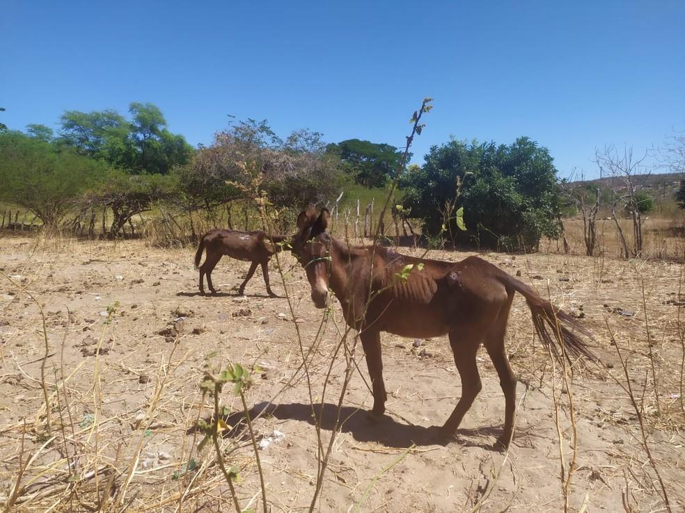 Foto dos animais dias depois da visita da Apipa, duas semanas após o início do tratamento — Foto: Apapi