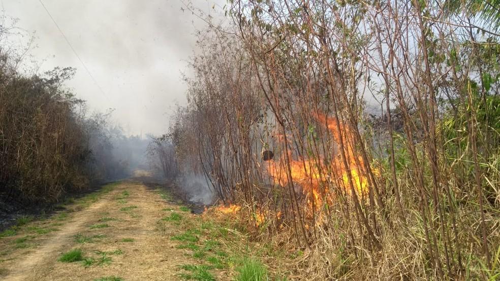 Acre já registrou mais de 5 mil focos de incêndios entre janeiro e esta quarta (18) — Foto: Tálita Sabrina/Rede Amazônica Acre
