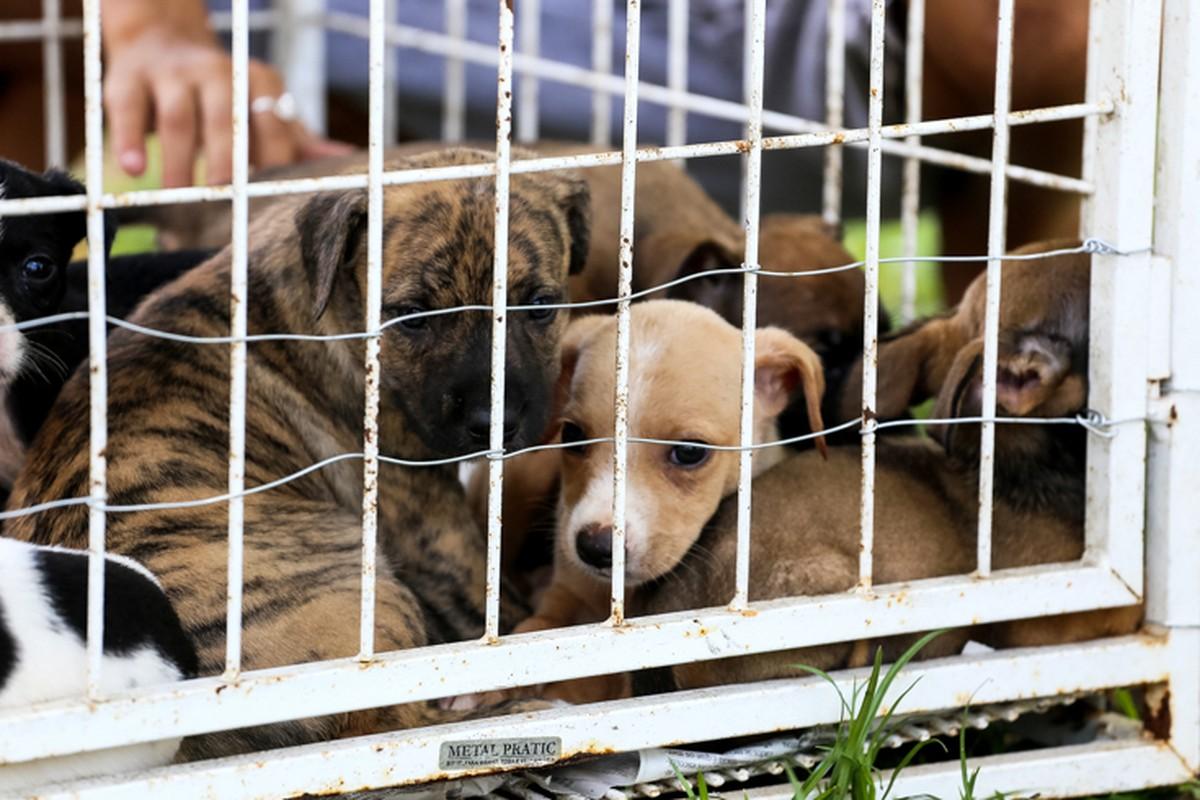 Centro de Controle de Zoonoses de Campos, RJ, tem cães e gatos para adoção