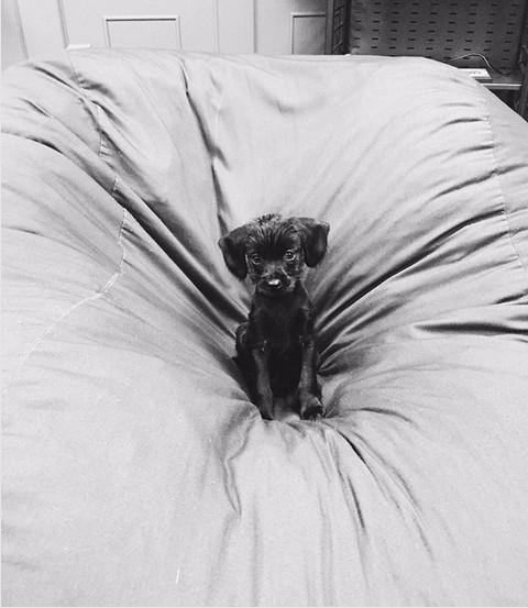 Um dos cachorrinhos da atriz Margot Robbie (Foto: Instagram)