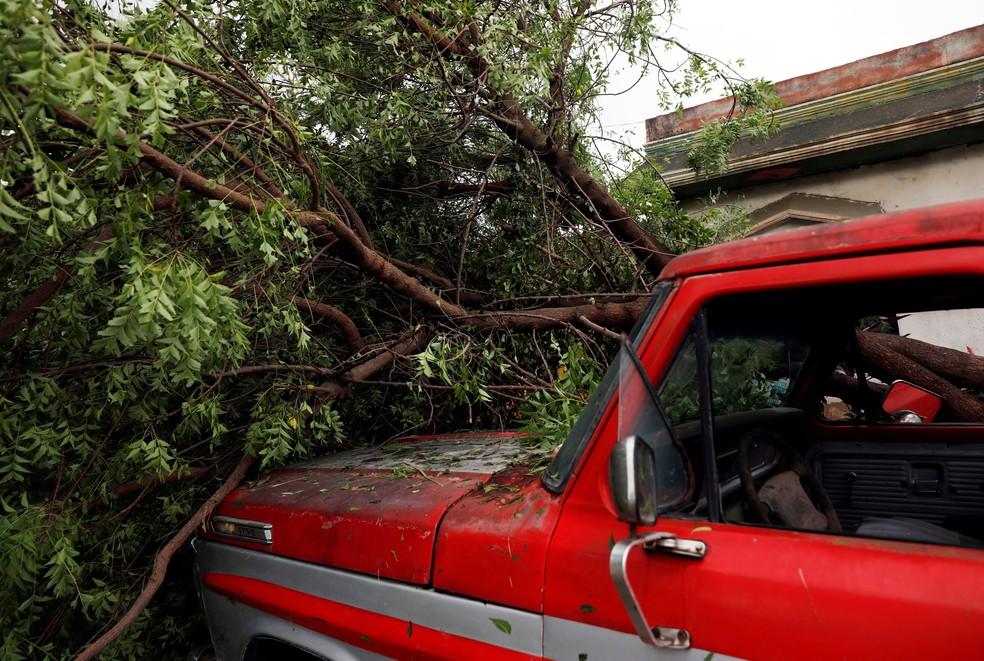 Árvore cai em um carro em Escuinapa, no sul do estado de Sinaloa, depois da passagem do furacão Willa, no México, nesta quarta-feira (24)  — Foto: Henry Romero/ Reuters