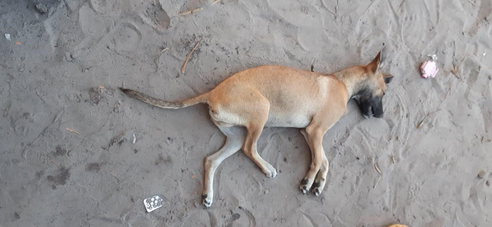 Homem é autuado por maus-tratos após invadir casa e matar cachorro sufocado