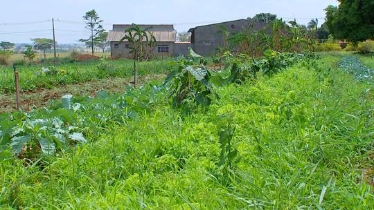 Transição agroecológica pode ajudar agricultores que não têm selo de orgânico