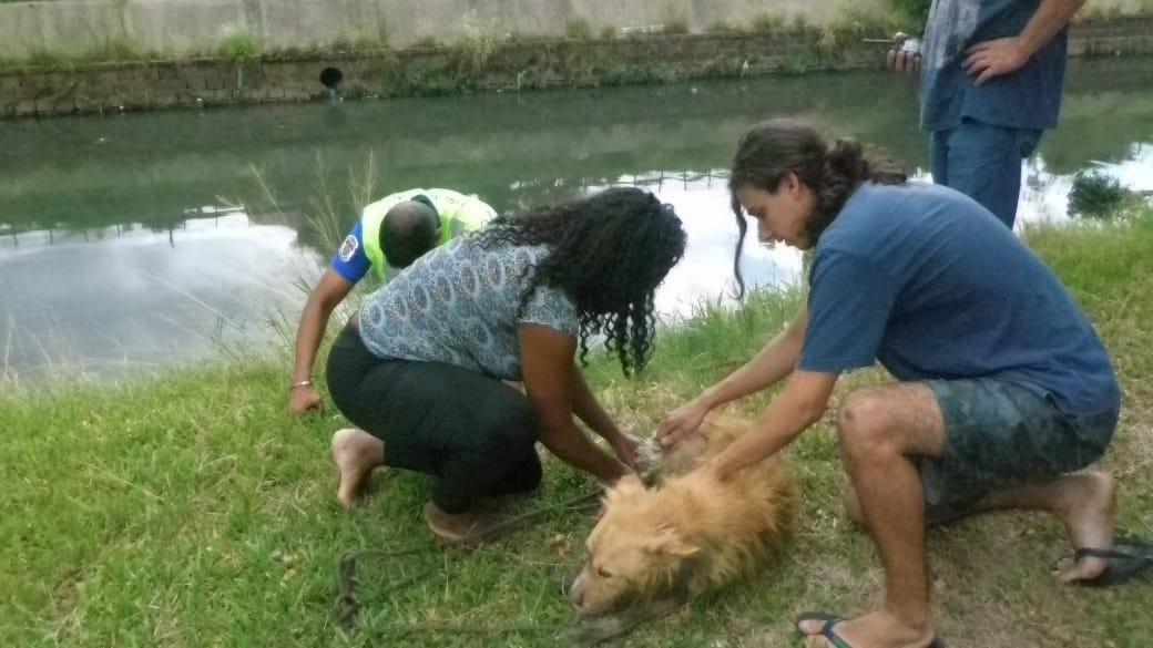 Cachorro que estava desaparecido é resgatado no Arroio Dilúvio em Porto Alegre