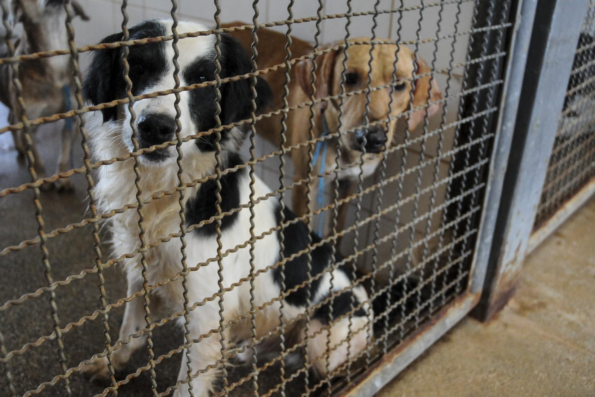 Mais de 50 cães esperam por adoção na Zoonoses, no DF