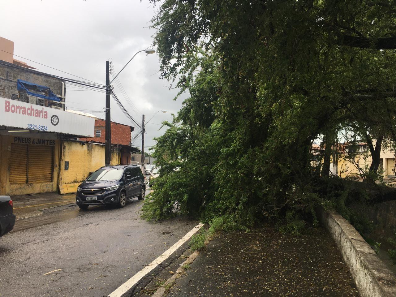 Árvore cai e bloqueia parte de avenida no bairro do Poço, em Maceió