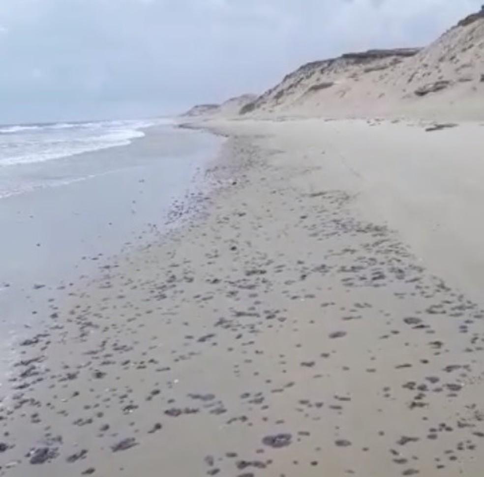 Praias do Ceará voltam a ter manchas de óleo depois de dois meses — Foto: Arquivo pessoal